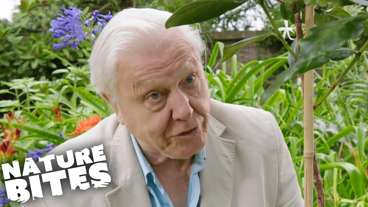 Download David Attenborough's Plant Mystery!   Nature Bites