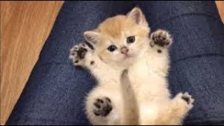 🤣 Best Funniest 😻 Cats and 🐶 Dogs - Awesome Cute Funny Pet Animals 2019 😇