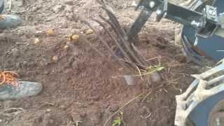 Копка картошки мотоблоком .(, 2013-09-01T15:32:19.000Z)