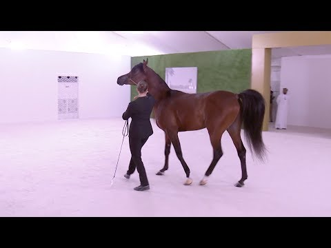 Abu Dhabi Crown Prince gives President Xi an Arabian horse as gift