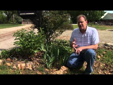 Controlling Grassy Weeds in Flower Beds