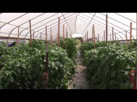 High Tunnels: Overview