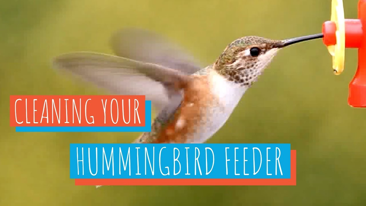 How To Clean A Hummingbird Feeder Youtube
