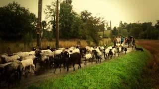 "La route de la transhumance dans le Béarn - La ""Transhumance Attitude"""