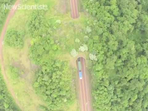Drone buzzes South America's first wildlife bridge