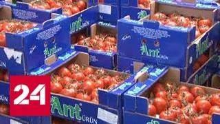 Россельхознадзор проверит турецких производителей томатов - Россия 24