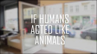 If Humans Acted Like Animals || CopyCatChannel