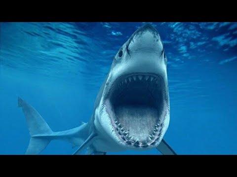Акула убийца.Самый страшный фильм ужасов! (По мотивам рассказа 12 дней страха)
