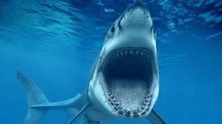 Акула...Самый страшный фильм ужасов! (По мотивам рассказа 12 дней страха)