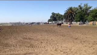 Thunder 14 year old Gelding (Northern California-Solano County)