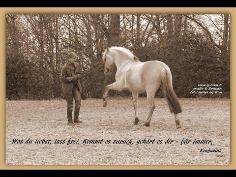 Spiele mit Pferden ... (mit dem LG-Zaum)