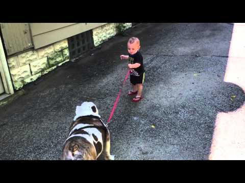 Little Boy VS Big Dog - Who's Going To Be The Boss?