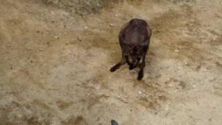 のんほいパークで5月10日にデジカメで撮影しました。 オーストラリア...