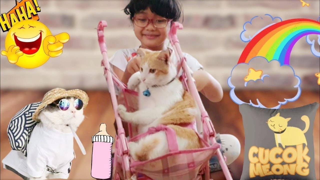 Drama Kucing Manja Minta di Pijit 😸 Kucing Miss Cemplon Feat. Shafeea Hanum