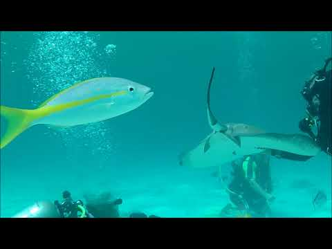 The Grand Cayman Island