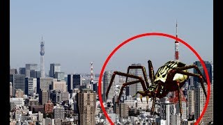 5 GIANT SPIDER CAUGHT ON CAMERA & SPOTTED IN REAL LIFE! 2