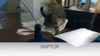 Ferplast - Raptor
