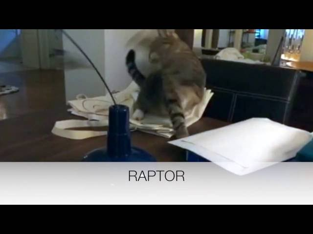 Ferplast - Raptor