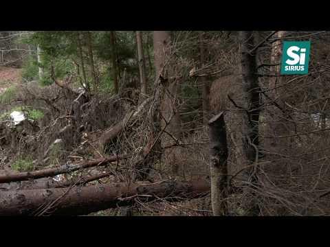 Трагедія на Рахівщині! У селі Чорна Тиса 6-річну дитину вбила дерев'яна колода