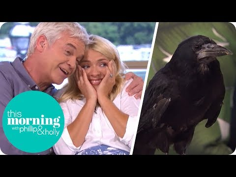 Holly Freaks Out as Pet Rook Runs Amok in the Studio | This Morning