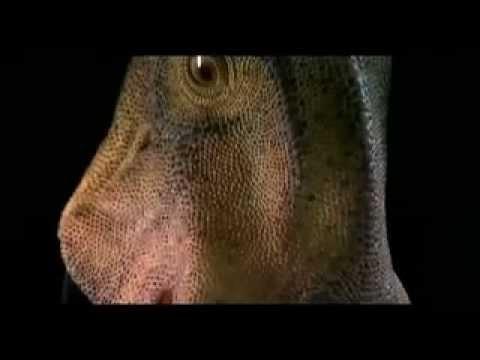 Nigersaurus clip.mov