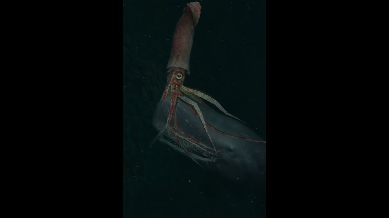 giant whale squid Picture sperm of