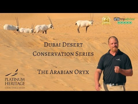 Dubai Desert Conservation Series – The Arabian Oryx
