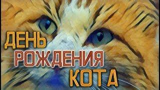ДЕНЬ РОЖДЕНИЯ КОТА! ✦ Чуня-фильм