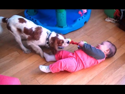 'Babies and Dogs Playing Tug of War Compilation' || CFS