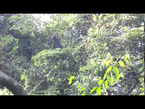 Chimpanzee Habituation Experience - Rubondo Island Camp