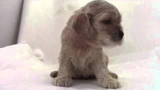 優良ブリーダーの子犬を紹介中!お気軽にお問い合わせください。 www.dr...