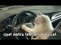This cat is in love with a car!