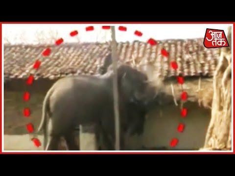 Drunk Elephants Create Ruckus In Chhattisgarh
