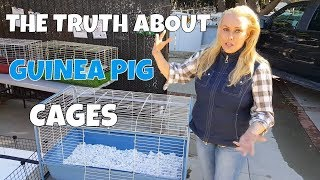 How Much Cage Space do Guinea Pigs Really Need?