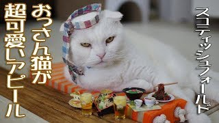 オッサン猫が激カワな姿に変身する時【Funny Act Cat】