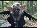 REAL TRICO The Last Guardian mp3