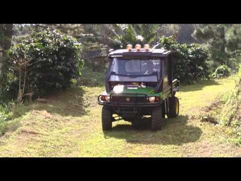 greenwich farm jamaica