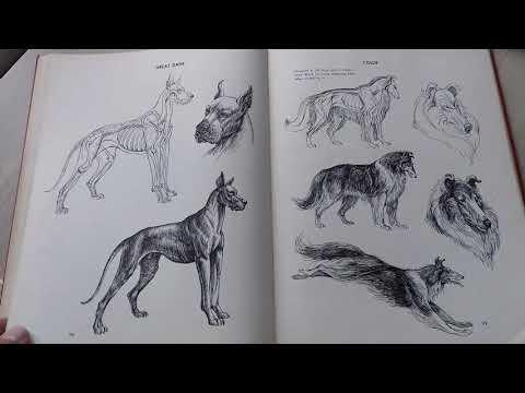 ken-hultgren---the-art-of-animal-drawing-construction-action-analysis-caricature-1950
