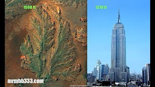 Man finds evidence of super massive tree w/leaves longer than the Empire State Building