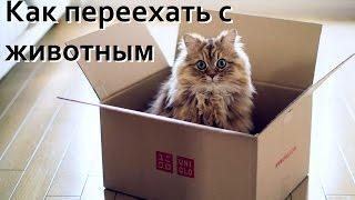Переезд с животными, самолет, поезд, документы