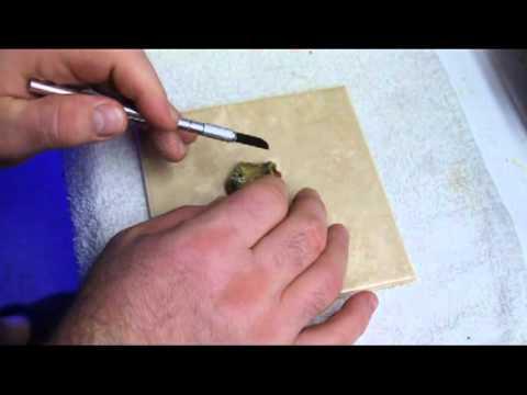 Mini Maxi Carpet Anemone Fragging Demo Youtube