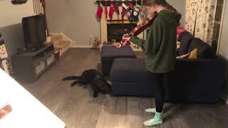 Singing Dog  German Shepherd sings with violin  he can't help himself