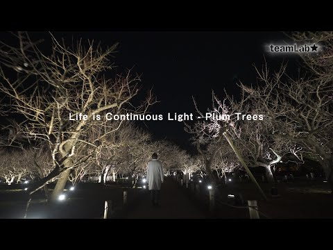 Life is Continuous Light - Plum Trees