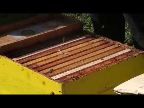 Hostabee connected hives create buzz in the bee business