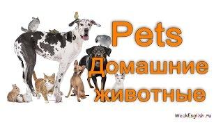 Домашние животные на английском языке.  English Vocabulary - Pets