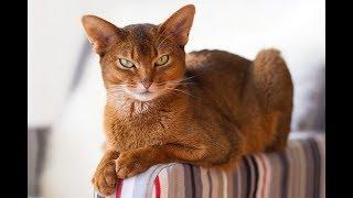 Большие друзья: священные кошки Древнего Египта