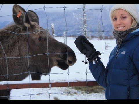 Wildlife Tour - Anchorage, Alaska