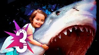 ★ 3 Most INSPIRING Shark Attack Survivor Stories! Great White Shark Attack Stories!