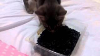 Кот гопник любит семки