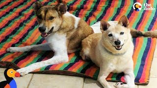 Nervous Dog With Twisted Spine Walks Again With Dog Best Friend's Help | The Dodo